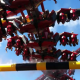 X-Flight - Final Near Miss - Six Flags Great America